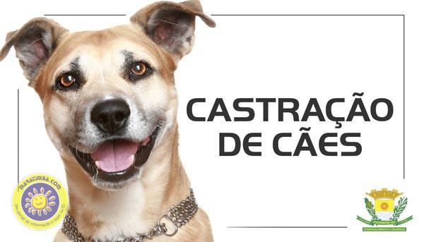 castracoes-de-caes